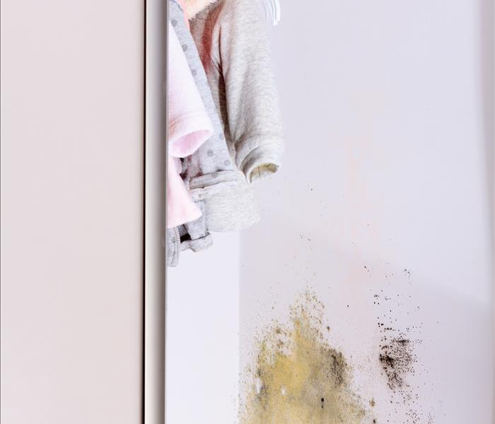 Mold Remediation How do I know if my home has mold?