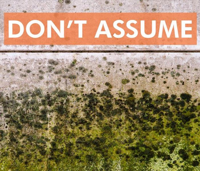 4 Types Of Mold You May See In Your Home