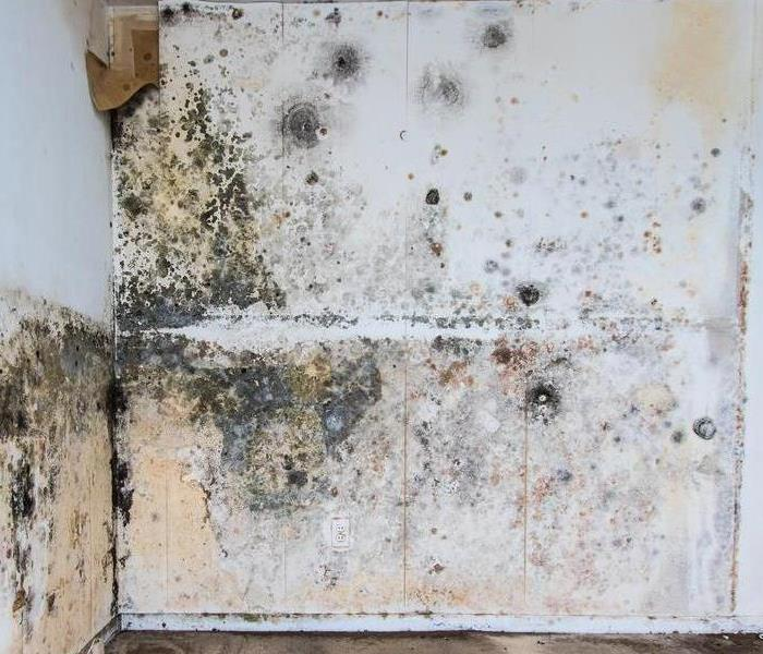 Mold Remediation Steps To Clean a Moldy Washing Machine